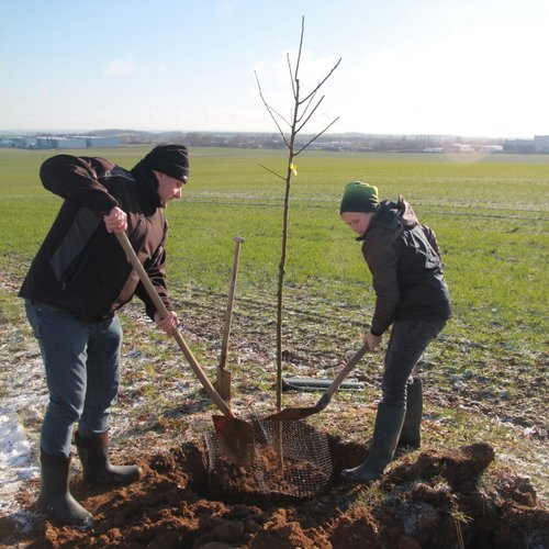 Zwei weitere UKA-Baumpflanzaktionen. Foto: Schule