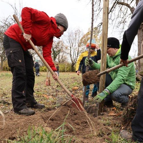 Mehrere Dutzend Helferinnen und Helferinnen griffen zu Spaten und Gießkanne, um die von UKA gespendeten Bäume bei Klipphausen zu pflanzen.