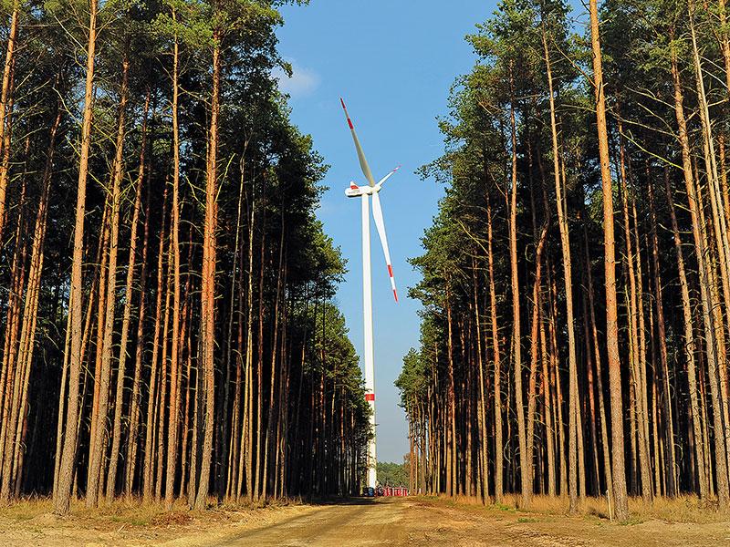 Windkraftanlagen auf einem Fald mit Ranking-Pokal im Vordergrund