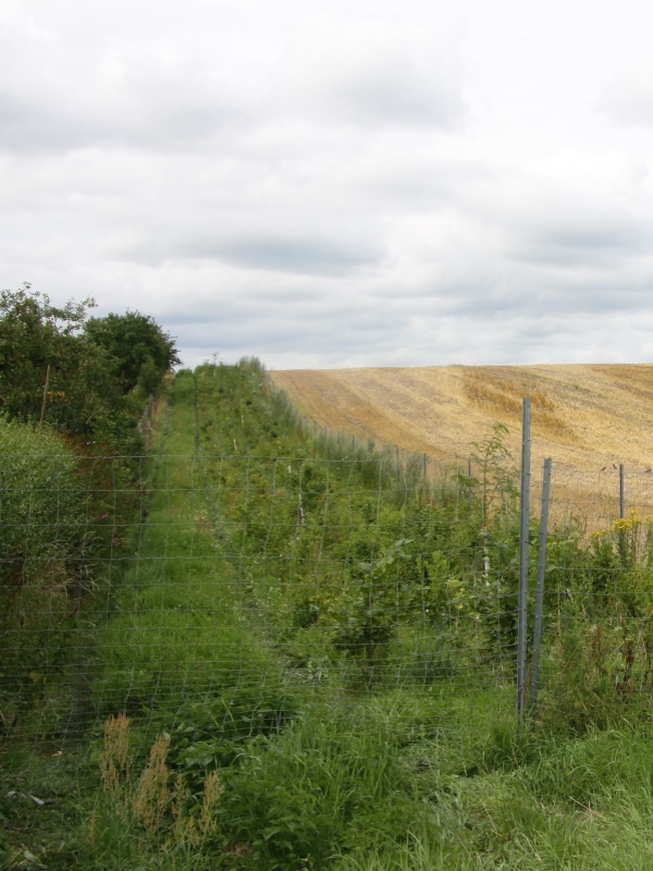 Hedge at the edge of Parchim