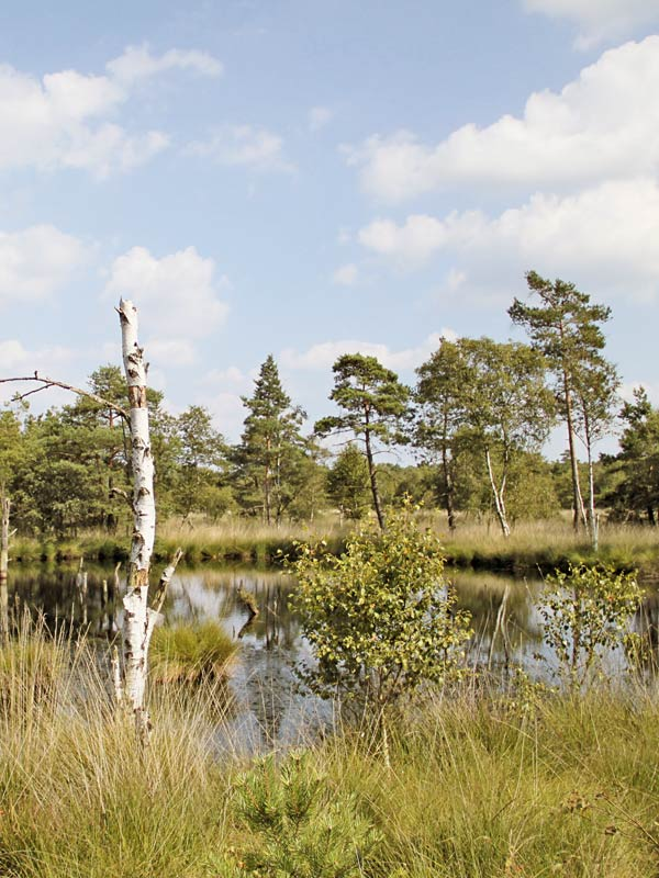 Renaturation of Moor Groß Luch swamp at Klein Leine